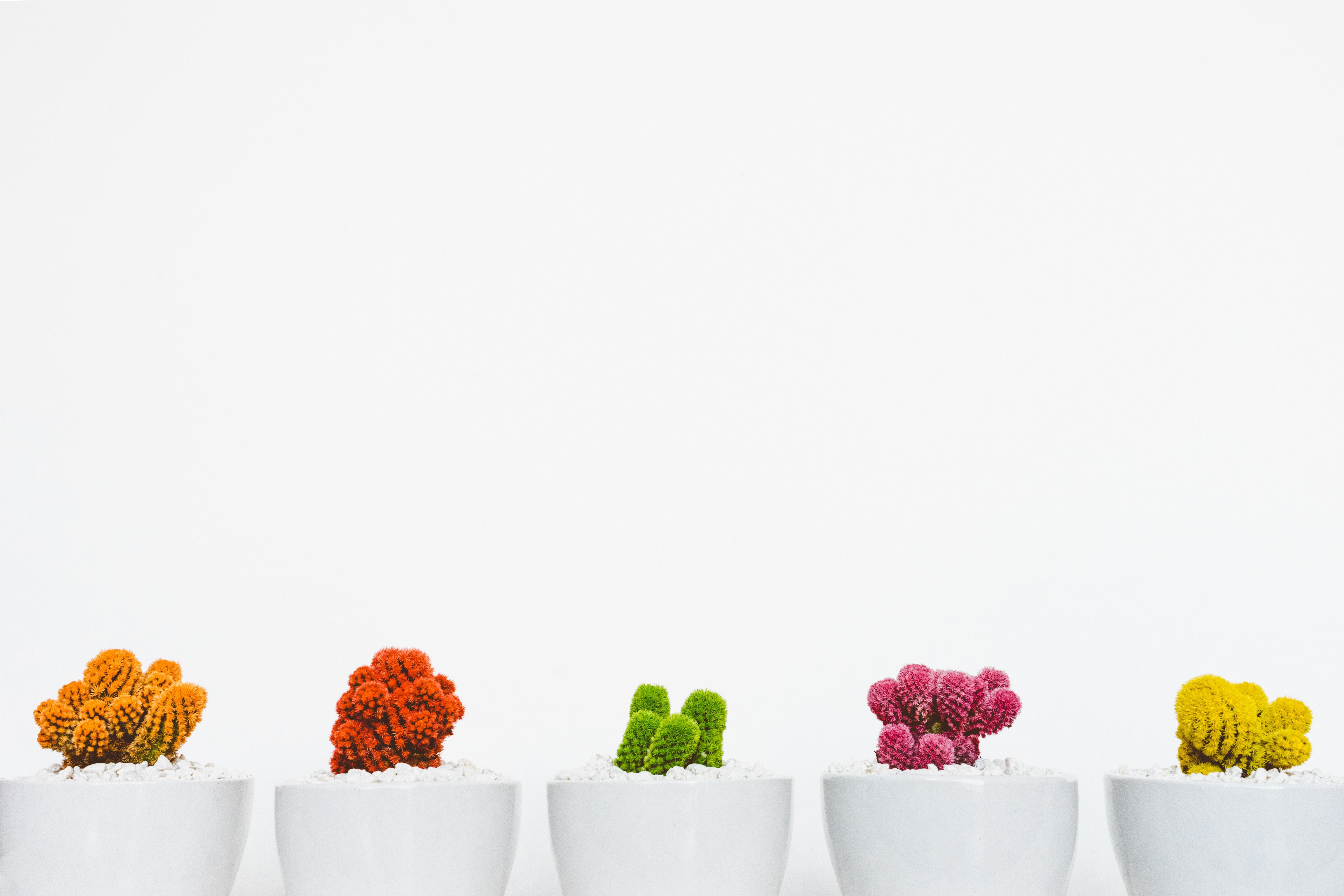Cute Colorful Succulents.jpg