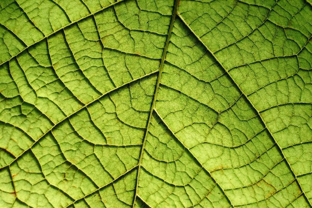 Leaf-651.jpg